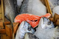 Fresh fish in the fish market. A limbless cold-blooded vertebrate animal with gills and fins and living wholly in water Royalty Free Stock Images
