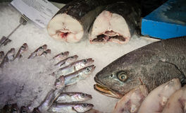 Fresh Fish. At a market in madrid spain Royalty Free Stock Image