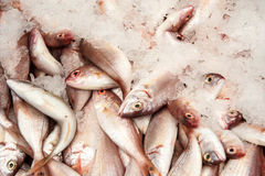 Fresh fish  at the  market of old City of Akko. Royalty Free Stock Photography