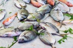 Fresh fish at a market in Palermo Royalty Free Stock Photos