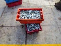 Fresh fish at the market, Peru Stock Photography
