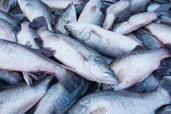 Fresh fish in a market that is red snapper and white display. Qu. Ality of marine products.Thailand Royalty Free Stock Images
