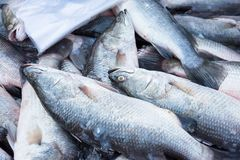 Fresh fish in a market that is red snapper and white display. Qu. Ality of marine products.Thailand Stock Photos