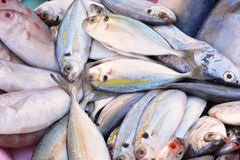 Fresh fish in the market Royalty Free Stock Photos