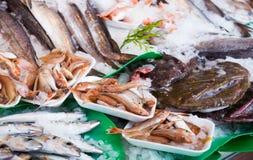 Fresh fish on market Royalty Free Stock Photography