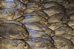 Fresh Fish Market Stock Images
