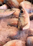 Fresh fish at the market. Some fresh fish with ice at the market, portrait cut royalty free stock photo