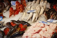 Fresh fish on a market stall, Heraklion. Royalty Free Stock Photography