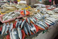 Fresh fish market stall. Various fresh fishes for sale in fish market Royalty Free Stock Photo
