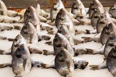 Fresh fish rows on the fish market stock photos