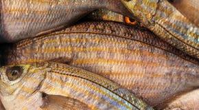 Fresh fish at the market, strange look Stock Images