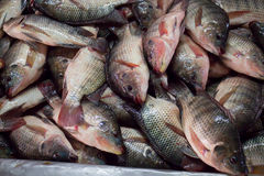 Fresh fish on the market Royalty Free Stock Photos