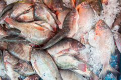 Fresh fish at the market Royalty Free Stock Images