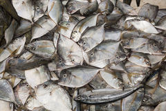 Fresh fish on the market. Variety of fresh fish in the market ready for sale, costa Ecuador Royalty Free Stock Photos
