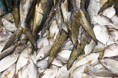 Fresh fish on the market Royalty Free Stock Image