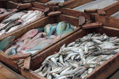 Fresh fish at the market. Fresh fish in the wooden box at the Dahar market stock photography