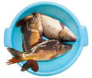 Fresh fish for meal Stock Photo