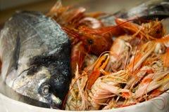 Fresh fish of the mediterranean Stock Image