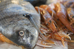 Fresh fish of the mediterranean. Wellness and health: raw fresh fish of the mediterranean sea Royalty Free Stock Photography