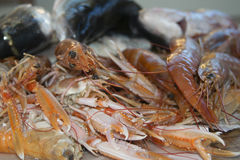 Fresh fish of the mediterranean Royalty Free Stock Photo