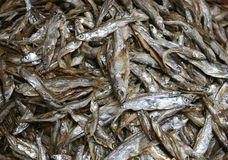 Fresh fish from the Mekong river in Asia  Royalty Free Stock Images