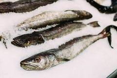 Fresh fish merluza or hake on ice on market store shop Stock Images