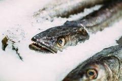 Fresh fish merluza or hake on ice on market store shop. Stock Images