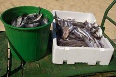 Fresh fish Nazare Portugal Stock Photos