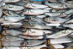 Fresh fish offer for sale Royalty Free Stock Photos