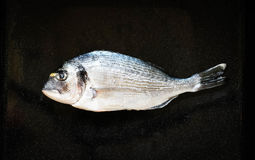 Fresh Fish Orata Over a Black stone with vegetables Royalty Free Stock Photos