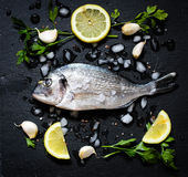Fresh Fish Orata Over a Black stone with vegetables Stock Image