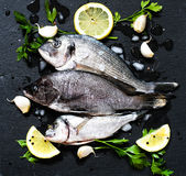 Fresh Fish Orata Over a Black stone with vegetables Royalty Free Stock Photography