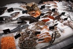 Fresh fish and other seafood. In supermarket Royalty Free Stock Image