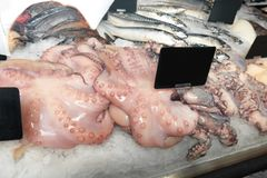 Fresh fish and other seafood. In supermarket Stock Photos