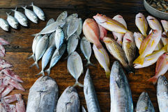 Fresh fish and other seafood on  wooden table Stock Image