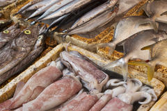 Fresh fish in an outdoor market Royalty Free Stock Photography