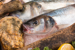Fresh fish and oyster on ice. Royalty Free Stock Image