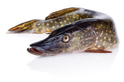 Fresh fish pike Isolated on white background Stock Photo