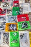 Fresh Fish in plastic tray on the beach near Long Hai fish market Stock Images
