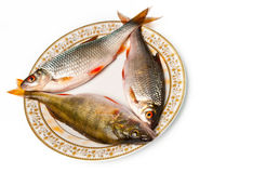 Fresh fish on plate. On white background Stock Images