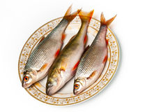 Fresh fish on plate. On white background Royalty Free Stock Photos