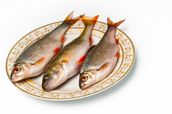 Fresh fish on plate Stock Images