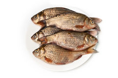 Fresh fish on plate. On white background Stock Photography
