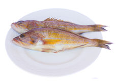 Fresh fish on plate Royalty Free Stock Images