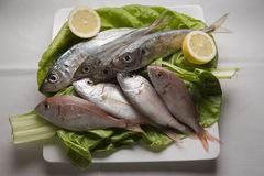 Fresh fish plate Royalty Free Stock Image