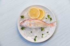 Fresh fish on plate ice with lemon and parsley white table background top view. Fresh fish on plate ice with lemon and parsley on white table background top view royalty free stock photo