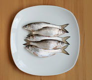 Fresh fish on a plate. Fresh roach on a white plate on a wooden table Stock Images