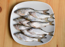 Fresh fish on a plate. Fresh roach on a white plate on a wooden table Stock Image