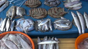Fresh fish, prawns and squids in metal plate - seafood market in Kochi, India stock footage