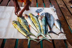 Fresh fish prepared by the fisherman Royalty Free Stock Image